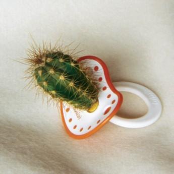 Kaktusdudlík