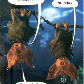 Netopiere