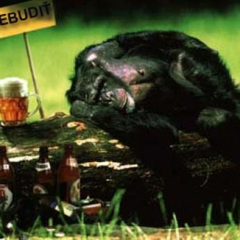 Nebudiť! Opica po opici