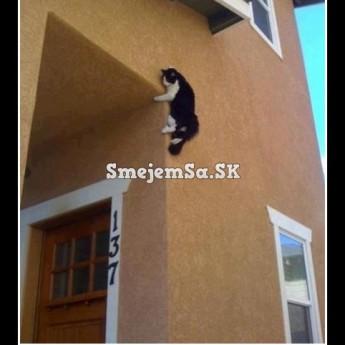 Mačka na stene