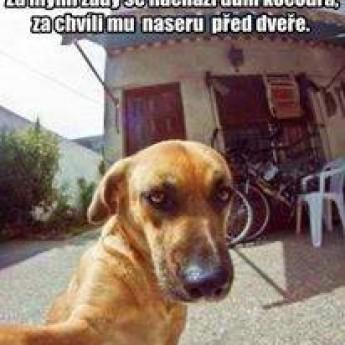 Dokonalý plán psa :D