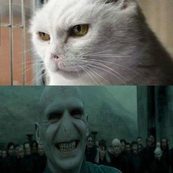 Voldemortova mačka