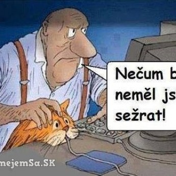 Mačka a myš