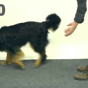 Ako reagujú psy na mágiu