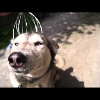 Kuťko a škrabka na hlavu
