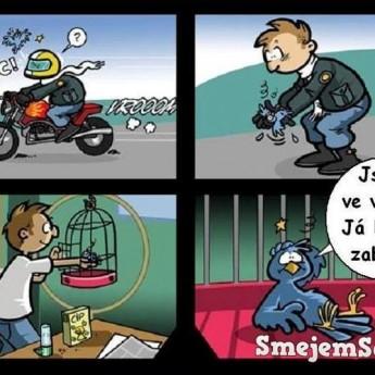 Zrážka vtáka s motorkárom