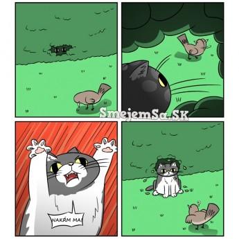 Mačka loví…