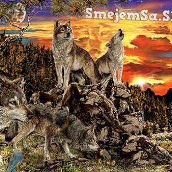 Koľko vlkov je na obrázku?