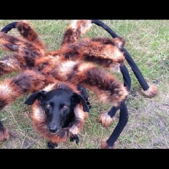 Gigantický pavúk