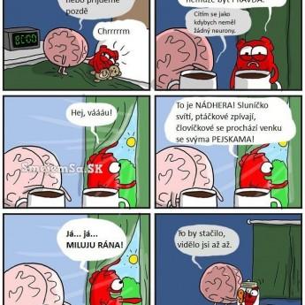 Srdce vs. mozog ráno