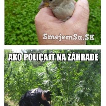 Lepší vrabec v hrsti…