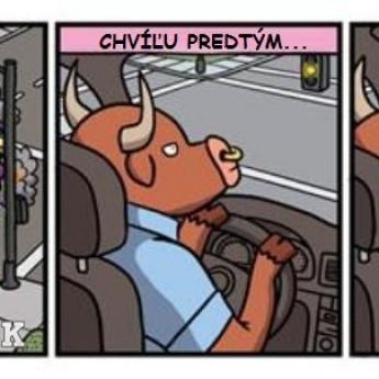 Býk za volantom