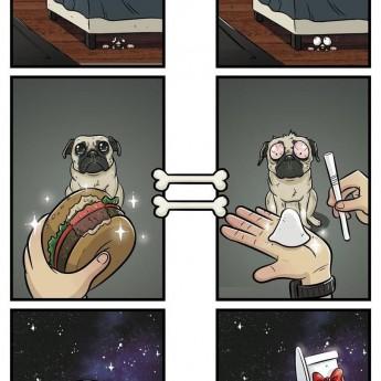 Veci zo psej perspektívy