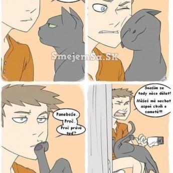 Mačacia logika