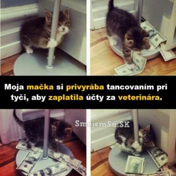 Mačka pri tyči