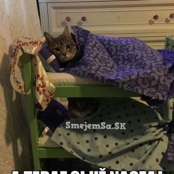 Posteľ pre mačky