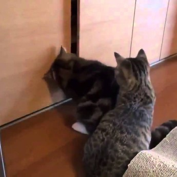 Mačka prekabátila druhú mačku