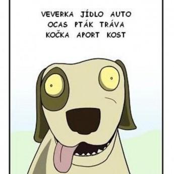 Jednoduchý psí život