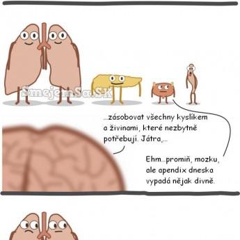 Zbytočný apendix
