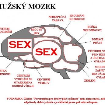 Mužský mozog
