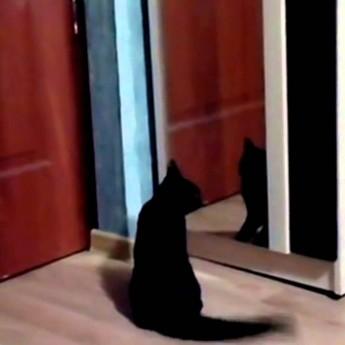 Mačka, ktorá bojuje sama so sebou