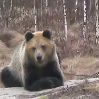 Medveď bojuje so psom