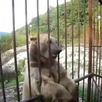 Veľmi plachý medveď