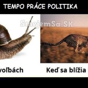 Tempo práce politika