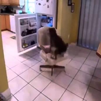 Pes kradne jedlo z chladničky