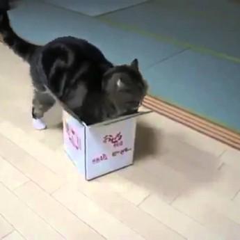 Veľká mačka vs. malá krabica