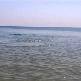 Delfín sa hrá s ľuďmi