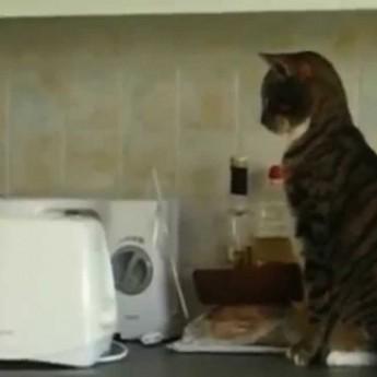 Mačky vs. hriankovače