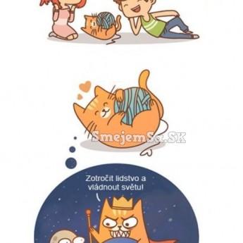 Nad čím premýšľajú mačky
