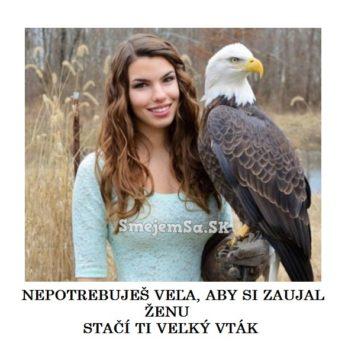 Veľký vták